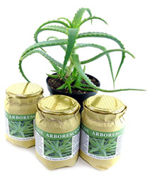 aloe arborescens where buy