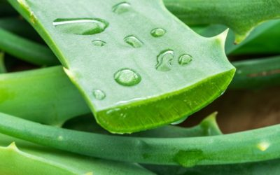 Aloe Vera gel for face care: benefits and use guide